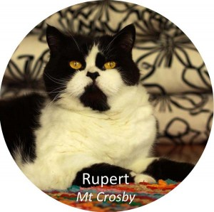 Rupert on rug - Copy copy