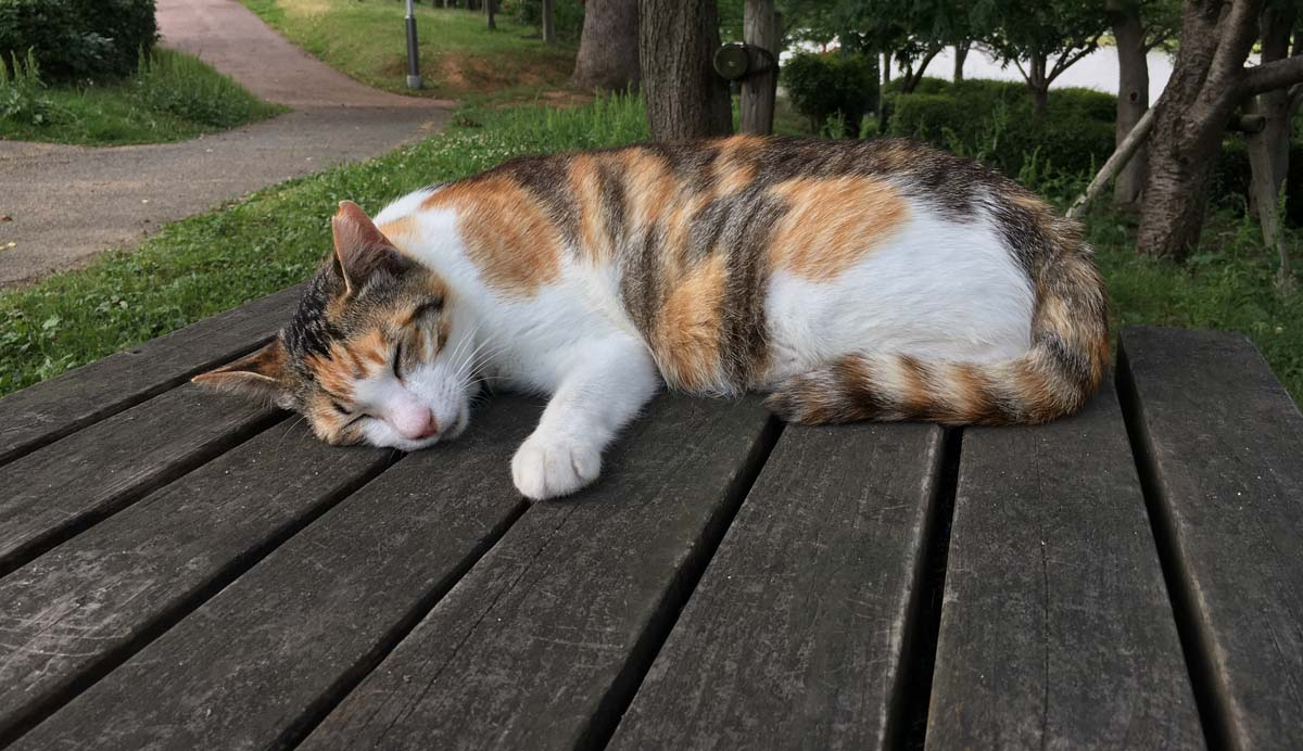 cat sleeping on verandah