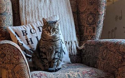 old cat sitting in chair waiting for euthenasia
