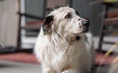 old dog sitting on floor